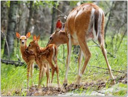 Continue reading: Oh deer: In fighting Lyme disease, are we watching the wrong mammals?