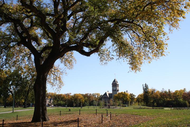 Winnipeg Dutch elm disease