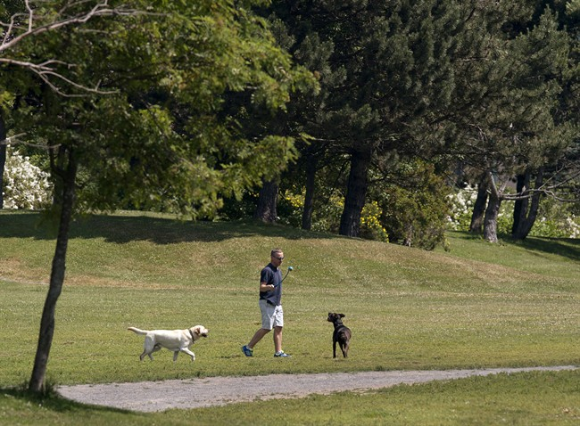 The City of Toronto is asking dog owners to keep their pets on a leash as crews investigate the cause of recent wildlife deaths.