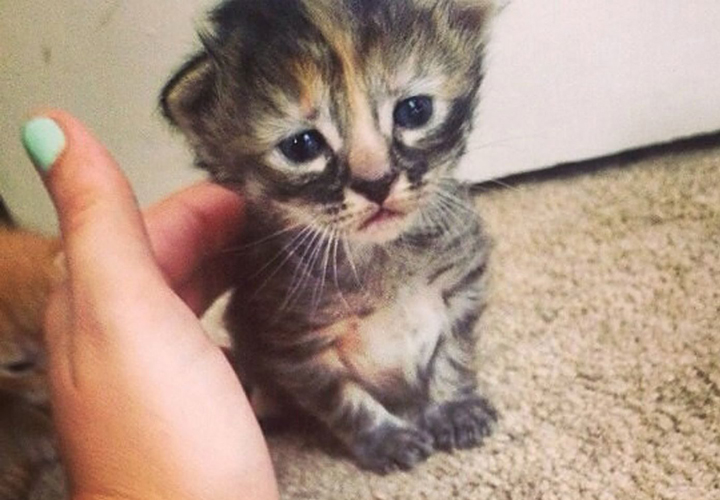 Purrmanently Sad Cat The Adorable Kitten That Will Break Your Heart National Globalnews Ca