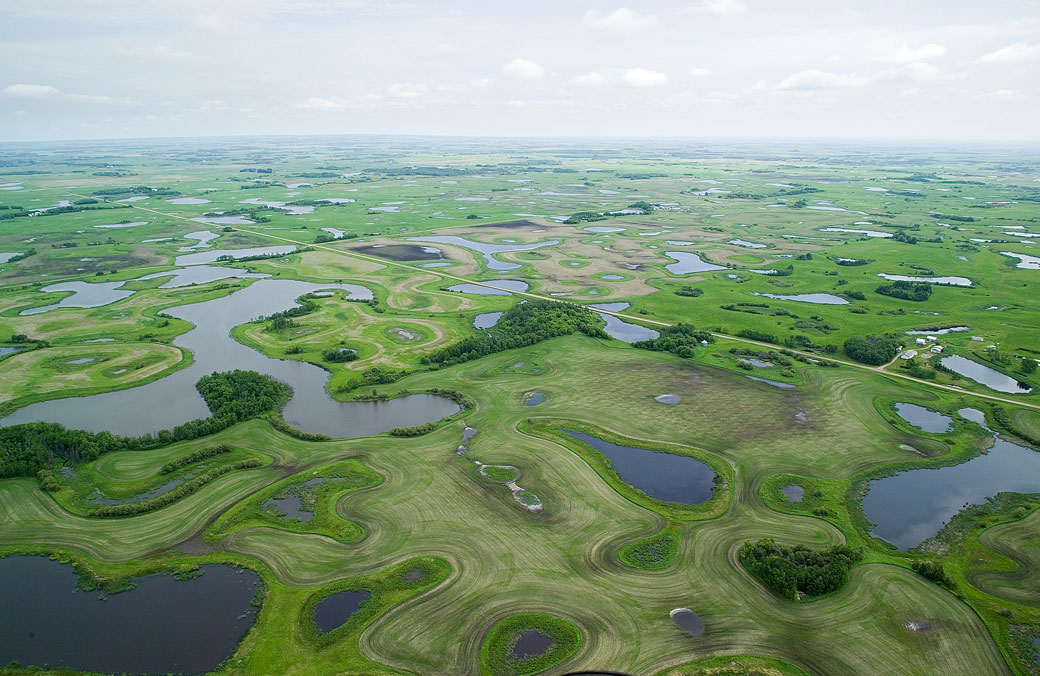 Wetlands play a crucial role in both drought and flood conditions and their loss is being felt across the Prairies.