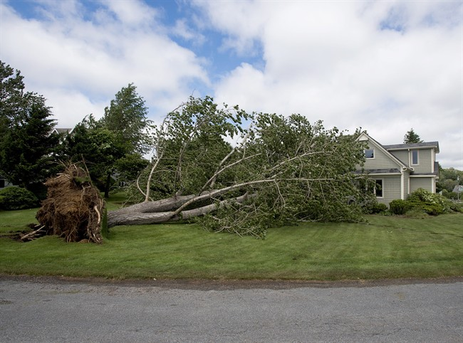 A large uprooted tree rests against a house in Oakland, N.S. on July 5, 2014.
