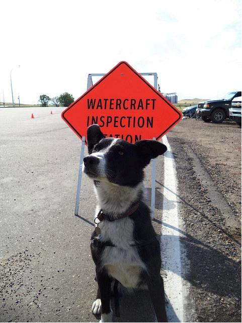 Specialized detection dogs are following their noses and protecting Alberta from invasive zebra and quagga mussels.