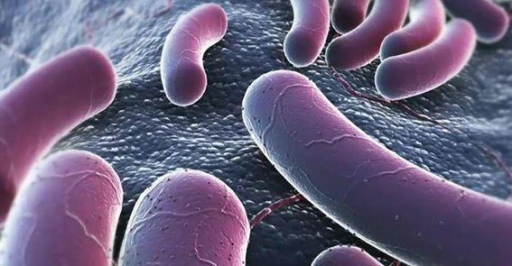 Microscopic image of E.coli bacteria.
