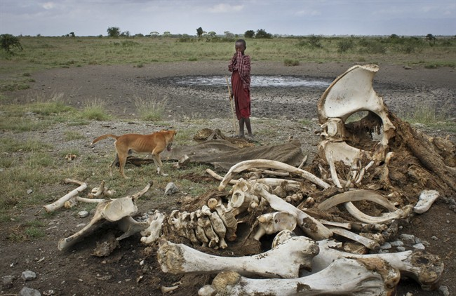 A Maasai boy and his dog stand near the skeleton of an elephant killed by poachers outside of Arusha, Tanzania.