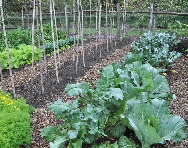 How to grow fall vegetables