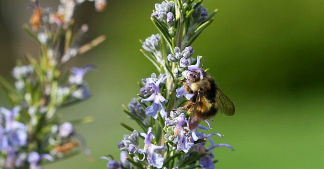 The use of neonicotinoid pesticides is a threat to bees and insects as well as humans .