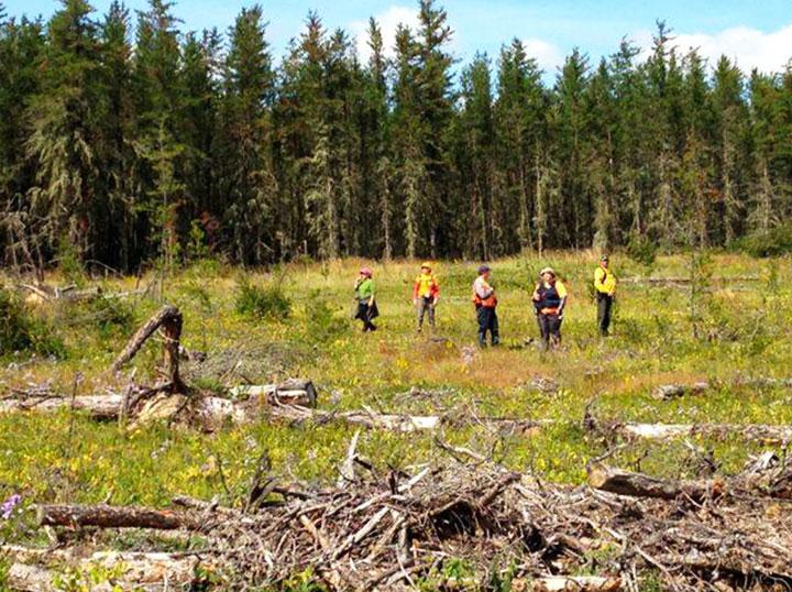 A senior went missing Saturday while picking berries in dense bush in west-central Saskatchewan.