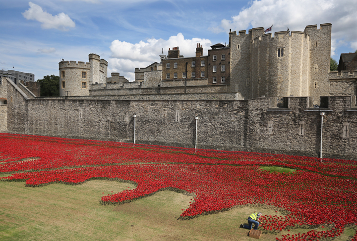 Volunteers continue to assemble an installation entitled 'Blood Swept Lands and Seas of Red' by artist Paul Cummins, made up of 888,246 ceramic poppies, is seen in the moat of the Tower of London to commemorate the First World War on August 3, 2014 in London, England.