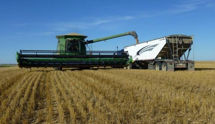 Sept. 25: This Your Saskatchewan photo was taken by Cheryl Hare of harvesting a field of spring wheat on a farm northwest of Rosetown.