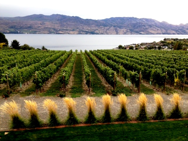 BC wine industry contributes $2B a year to province's economy - image