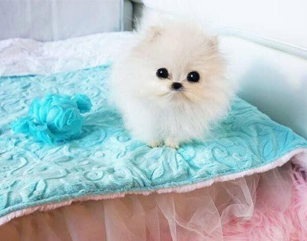 'Mr. Amazing', Paris Hilton's newest pet.