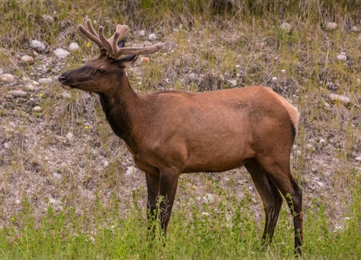 The Saskatchewan Ministry of Environment announced a case of chronic wasting disease has been discovered south of Melfort.