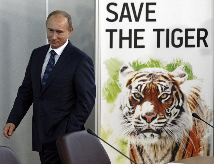In this Nov. 23, 2010 file photo, then Russian Prime Minister Vladimir Putin attends the International Tiger Forum in St. Petersburg, Russia.
