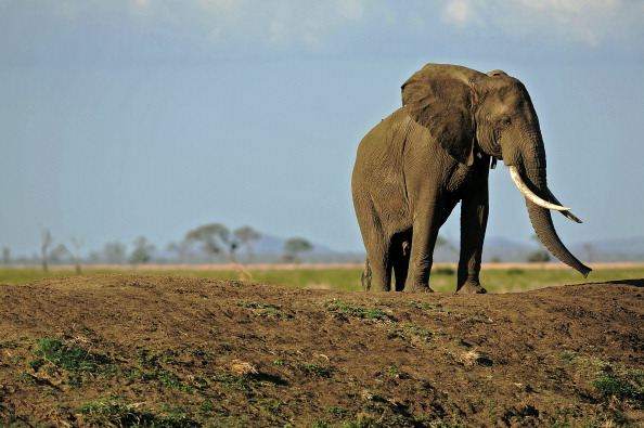TripAdvisor will no longer allow you to buy tickets to attractions like elephant riding.