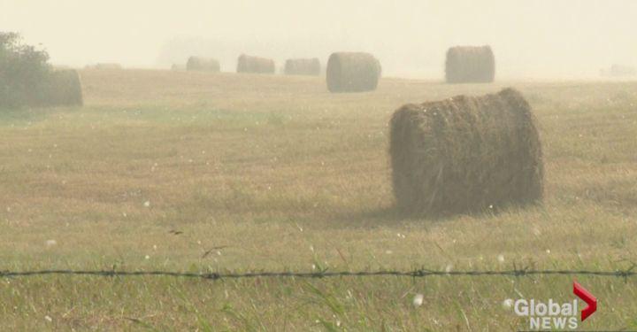Hail falls on a farm near Airdrie, Alberta August 7, 2014.
