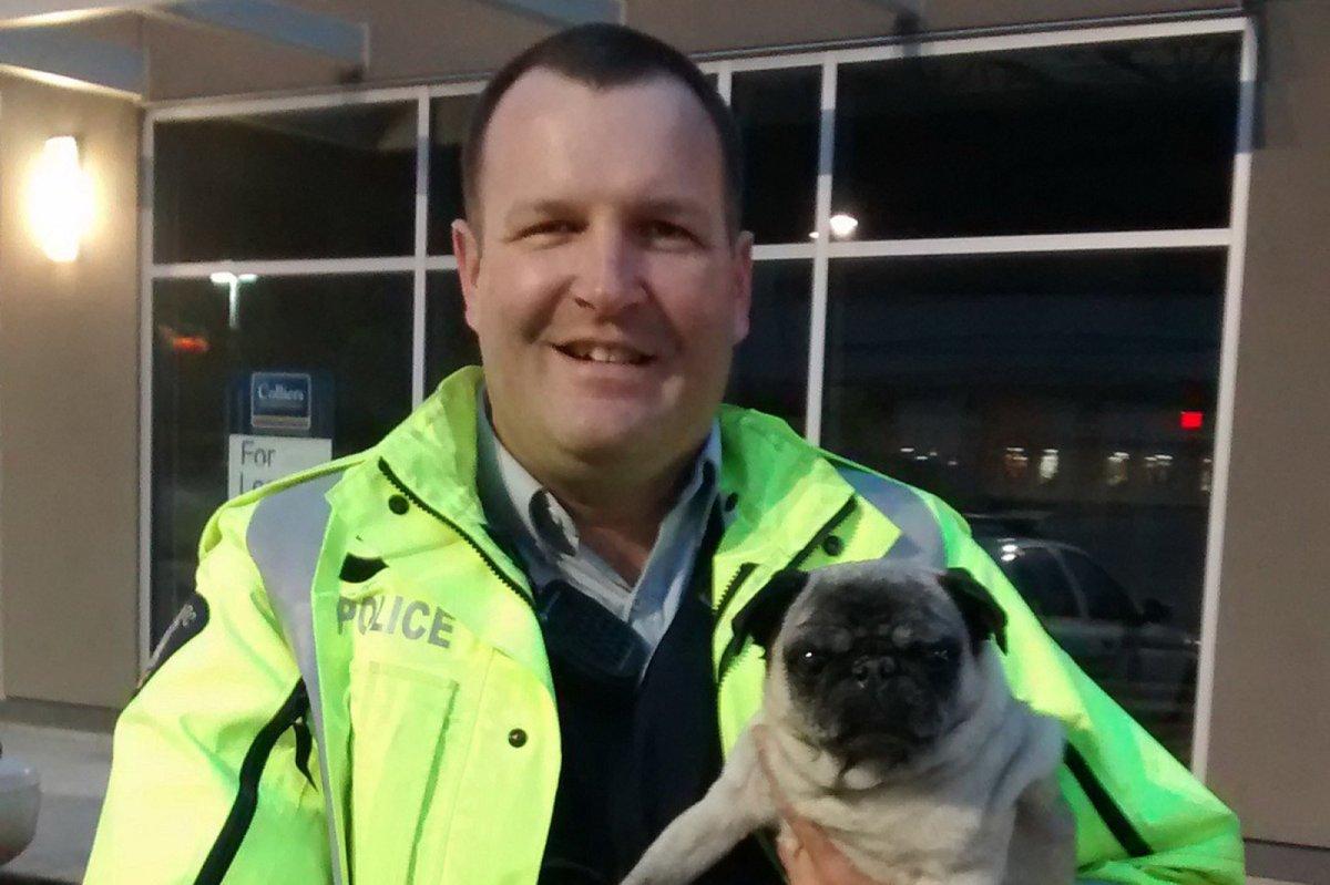 Astute Mountie helps reunite missing Okanagan dog with owner - image