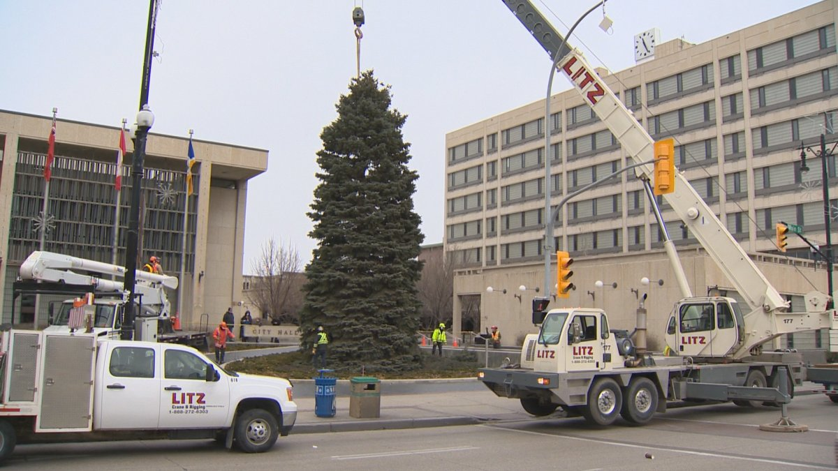 The Christmas tree is placed in front of Winnipeg City Hall on Sunday, Nov. 9, 2014.