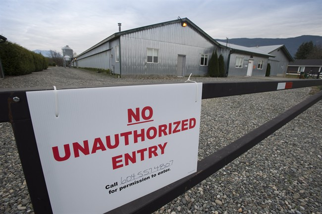 A poultry farm under quarantine because of a outbreak of avian influenza is pictured in Chilliwack, B.C. Thursday, Dec. 4, 2014. The Canadian Food Inspection Agency now says that there are now five farms in the Fraser Valley under quarantine due to this outbreak.