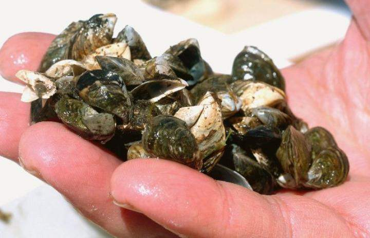 The Alberta government wants mandatory boat inspections to help prevent the spread of zebra and quagga mussels.