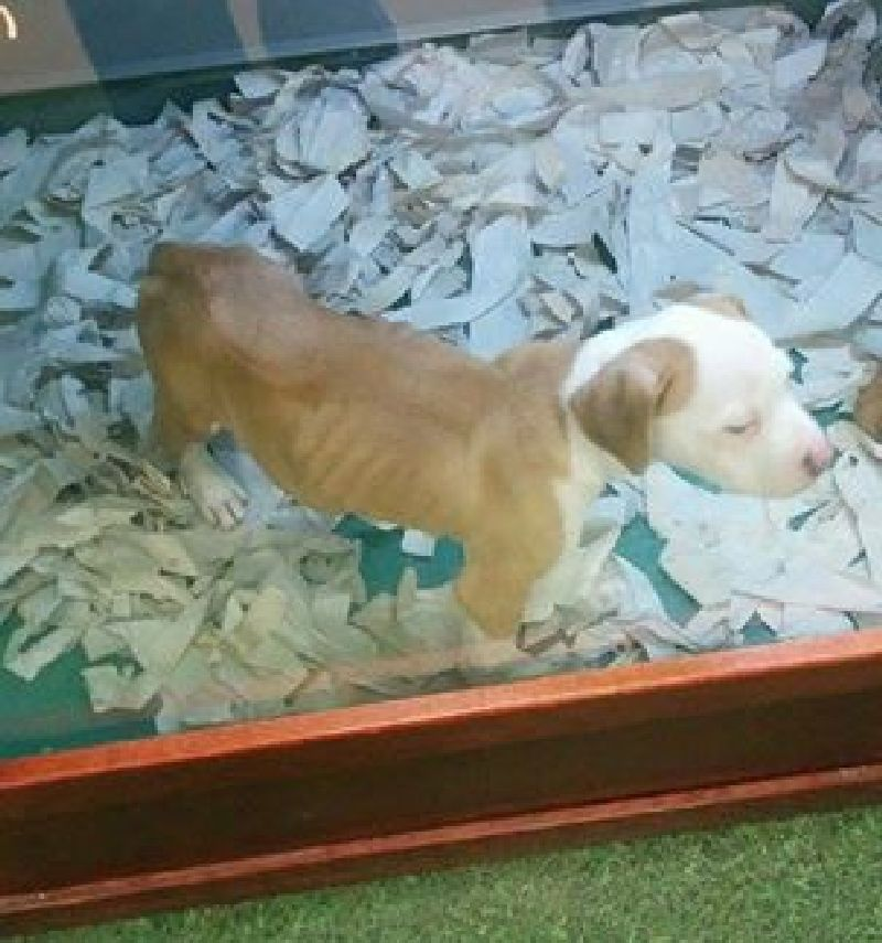 Justine Elliot's photo of a puppy at a West Edmonton Mall pet store has received a lot of attention since being posted on Dec. 2, 2014.