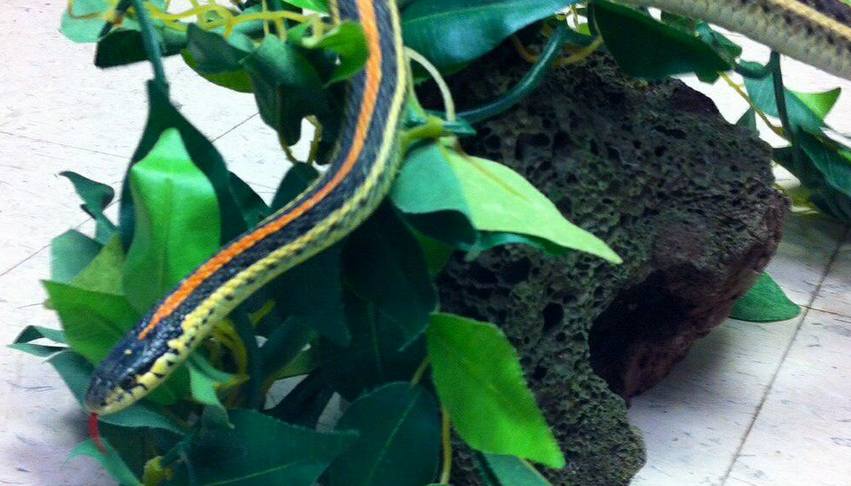 Saskatoon police released an image of the snake involved in the incident Monday evening.