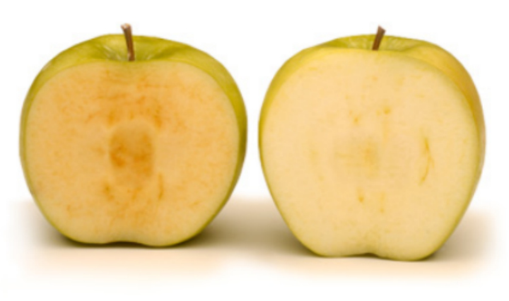 Sold! for $41-million; company behind Arctic Apple cashes in - image