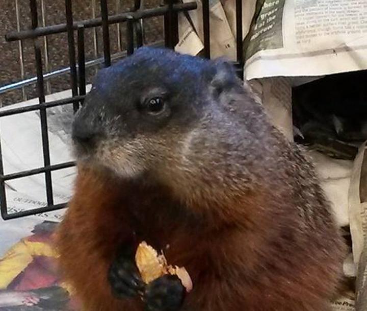 Groundhog Day Winnipeg Willow