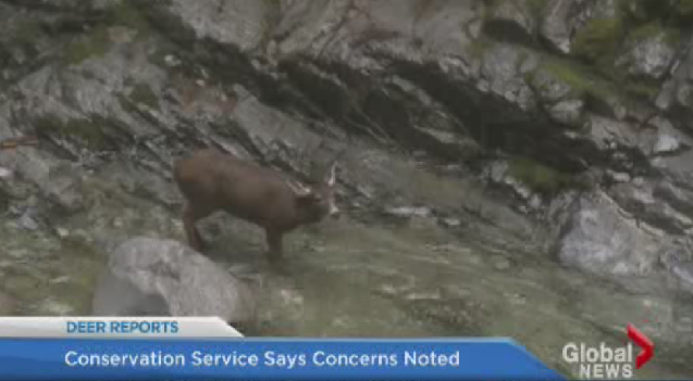 Residents say this deer may be stuck at the bottom of the falls.