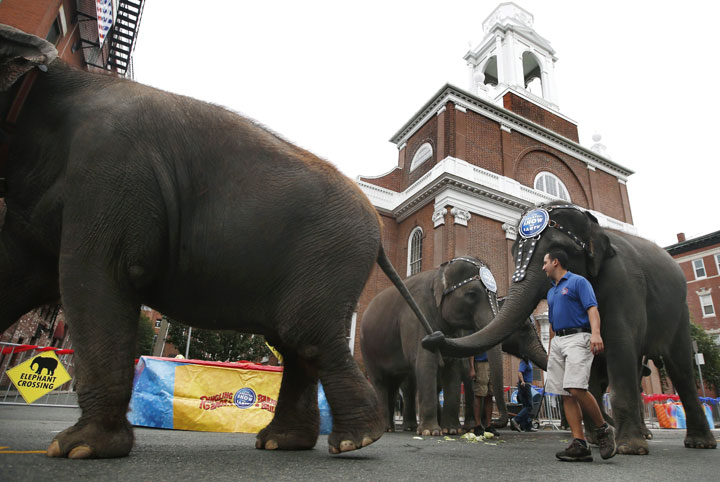Ringling Bros. and Barnum & Bailey's circus Asian elephants walk past St. Stephen's Church during an appearance in Boston's North End, Thursday, Oct. 17, 2013.
