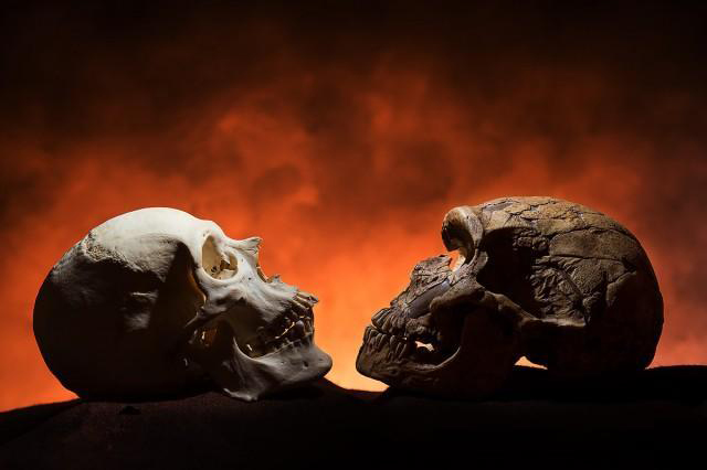 A modern human skull next to a Neandethal-era skull.