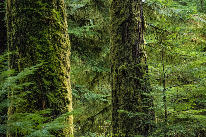 Canadian scientists are helping trees outrun climate change.