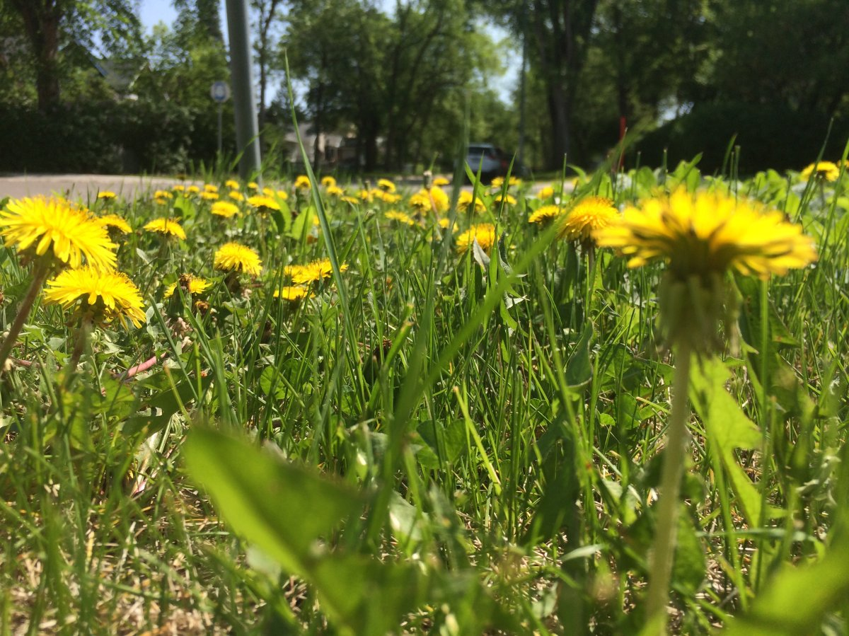 Kapyong Park in St. James is about to receive numerous upgrades.