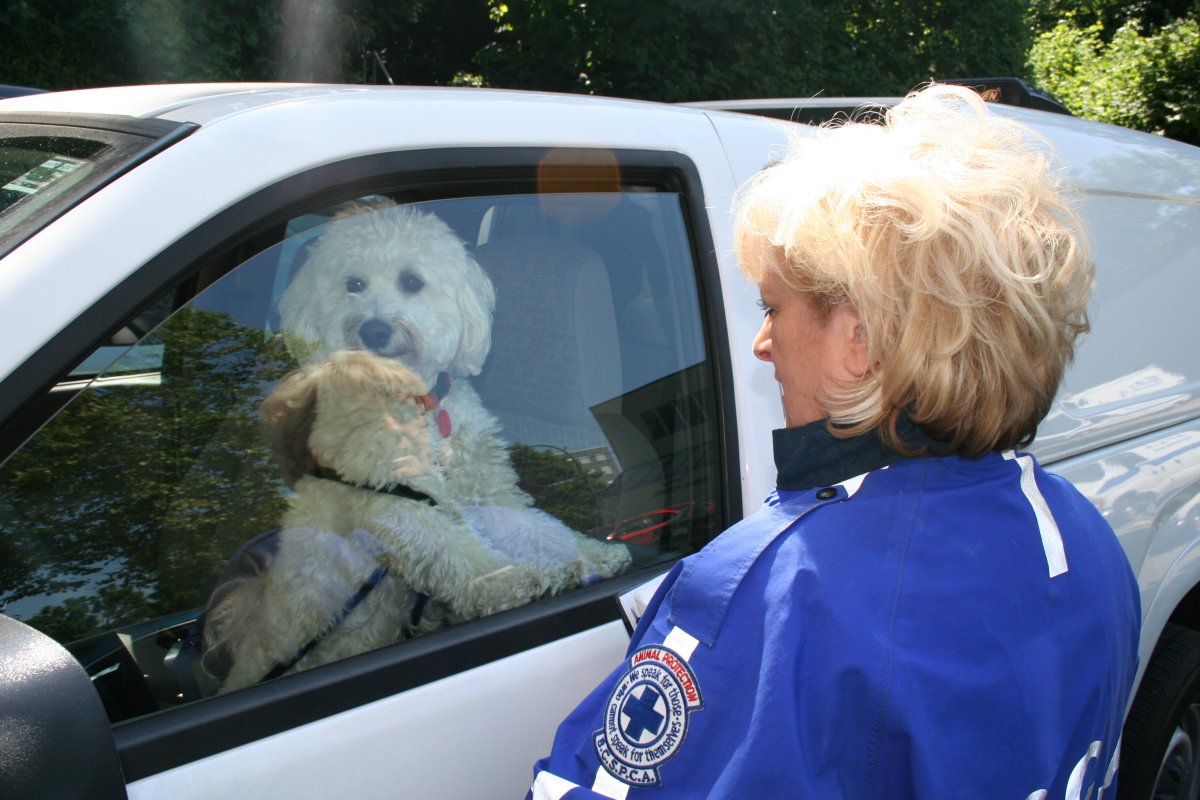 If you see a dog in a car in distress, call for help.
