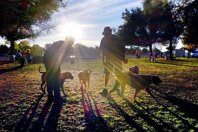 File: Dog Park.
