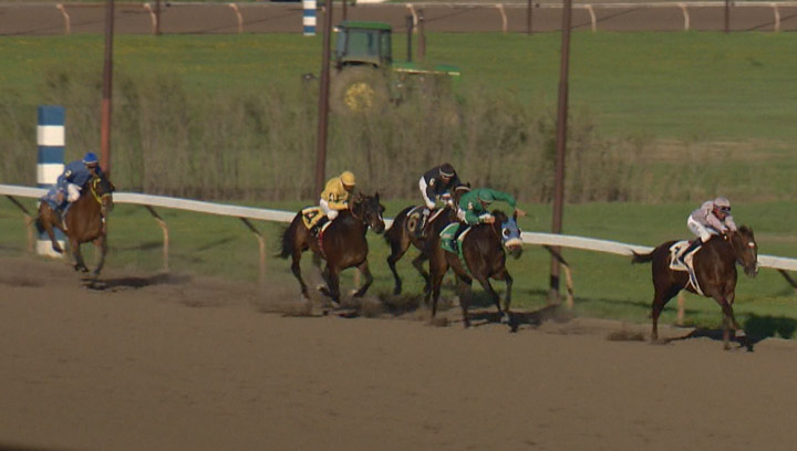 Horse racing at Marquis Downs in May 2014. Thoroughbreds are back on the track as the 2015 horse racing season kicks off at Saskatoon's Marquis Downs.