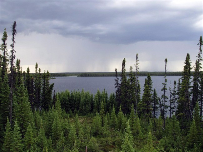 The Boreal Forest in central Quebec is shown in a 2007 handout photo.