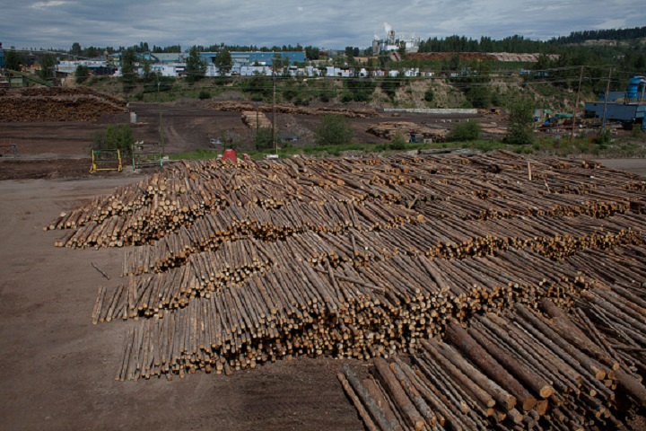 Logs that have recently arrived for processing are pictured at the West Fraser sawmill in Quesnel, British Columbia on Friday, June 5, 2015.