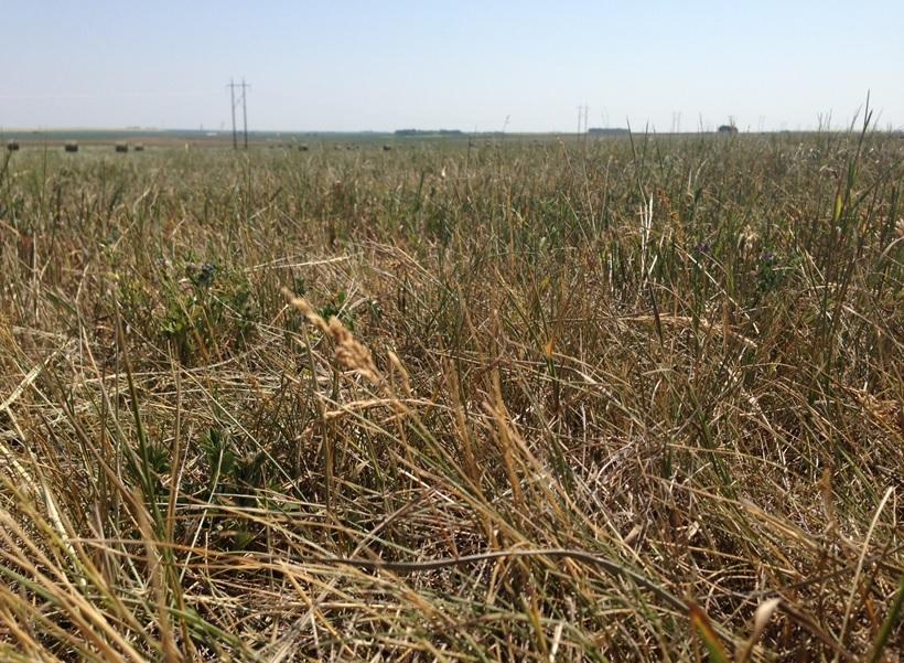 Alberta drought