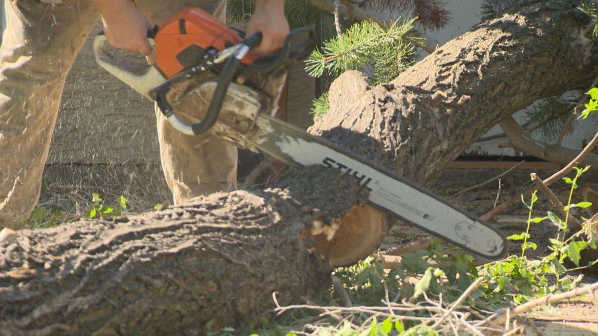 A chainsaw being used by arborists was taken and waved at motorists.