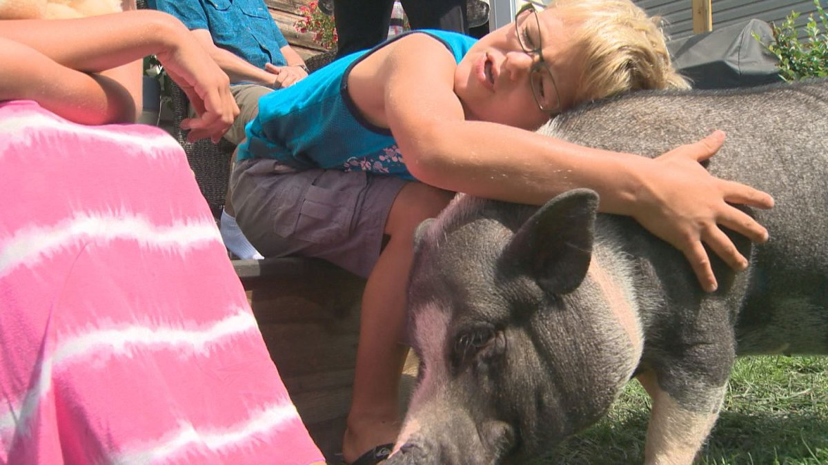 The Kropp family will be taking their pot-bellied pig Eli to a new home in Ontario.