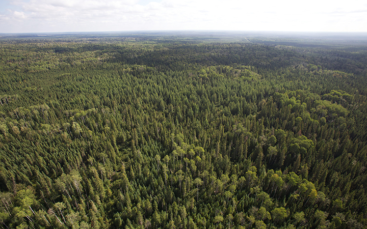 The Boreal Forest  is seen from a helicopter near Cochrane Ontario on August 24, 2010.