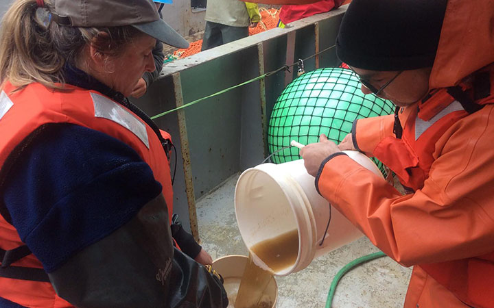 In this undated handout photo provided by NOAA Fisheries, researchers pour a sample of sea water containing a brownish toxic algae into a jar aboard a research vessel off the Washington Coast.