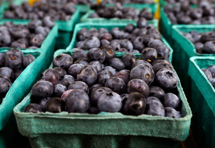 Oxford Frozen Foods Limited, the world's largest supplier of frozen wild blueberries, is planning a $8.5 million capital investment to create an improved packaging line.