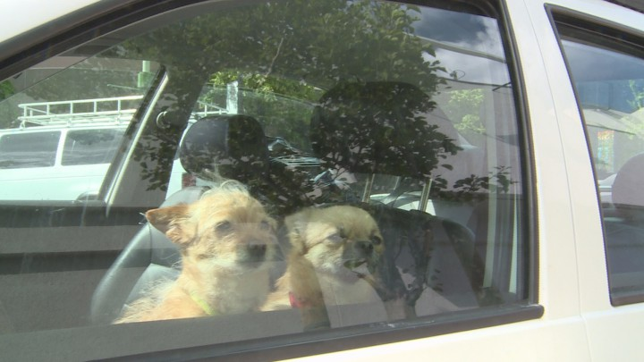 It only takes minutes for a dog to develop symptoms of heat stroke after being left in a hot car.