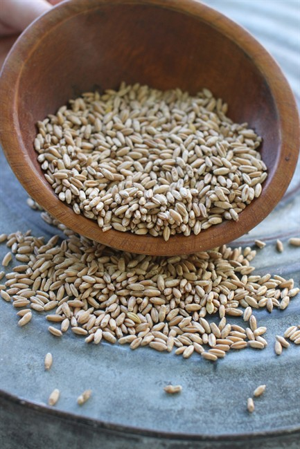 A wheat and rye blend triticale is tasty and versatile