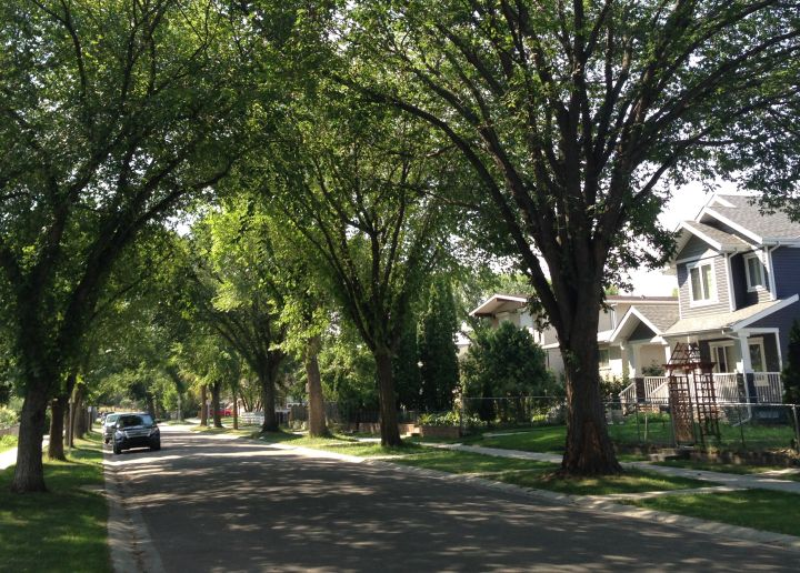 Edmonton's Parkdale Cromdale neighbourhood Tuesday, August 11, 2015.