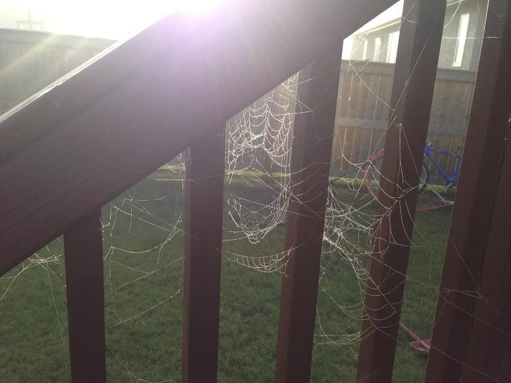 Spider webs adorn a deck south of Winnipeg on Thursday, August 13, 2015.