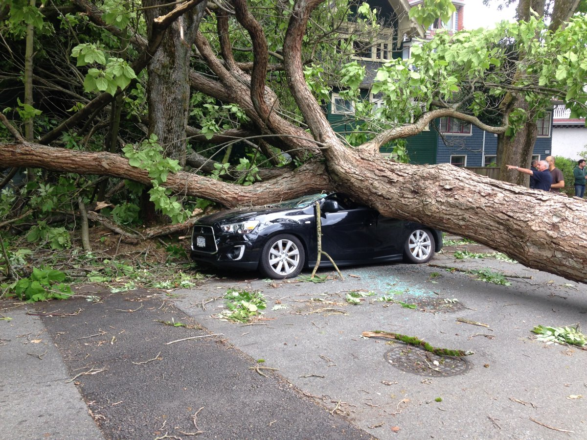 PHOTOS: Largest South Coast storm in a decade causes mass power outages - image