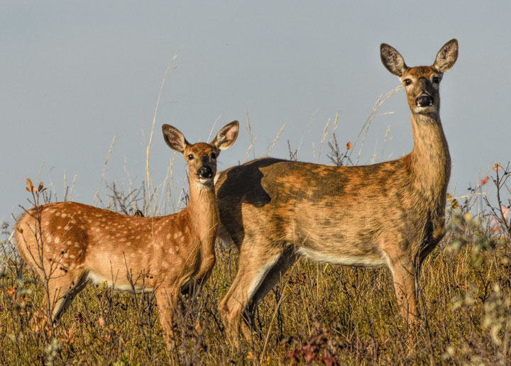 Hunting, conservation groups call for more action on chronic wasting disease.